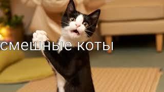 Смешные коты фото.