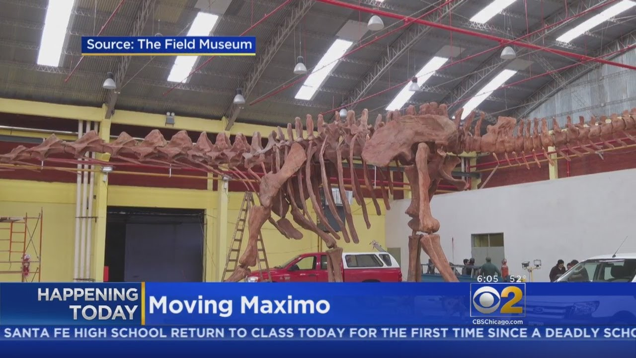 Field Museum scientists assemble Maximo, largest dinosaur discovered to date