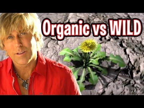 ORGANIC vs WILD FOOD
