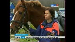 В 2014 году конные спасатели эвакуировали из труднодоступных районов Сочи 10 человек