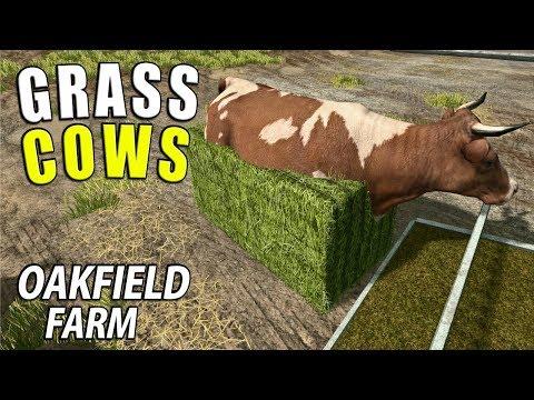 GRASS COWS   Farming Simulator 17   Oakfield Farm - Episode 38 thumbnail
