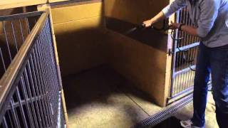 Behind The Scenes: Dawgs In Motion Instructional Kennel Cleaning Video