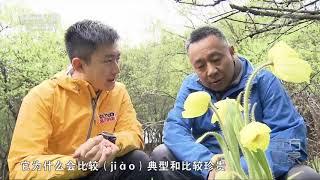[远方的家]世界遗产在中国 寻找高山秘境之花  CCTV中文国际
