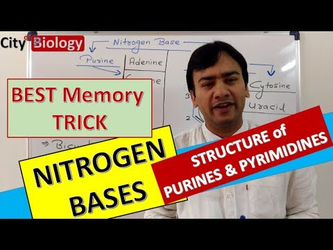 NITROGEN BASES ; PURINES & PYRIMIDINES : Best Memory Trick For NEET/AIIMS- PMT