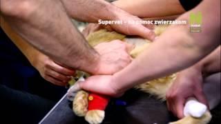 Supervet - na pomoc zwierzakom – promo – Polsat Viasat Nature (30 secs)