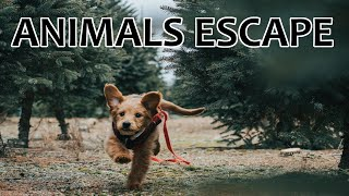 The Funniest Daring Dog Escape  Videos Of The Week Compilation  Funniest Animals Videos