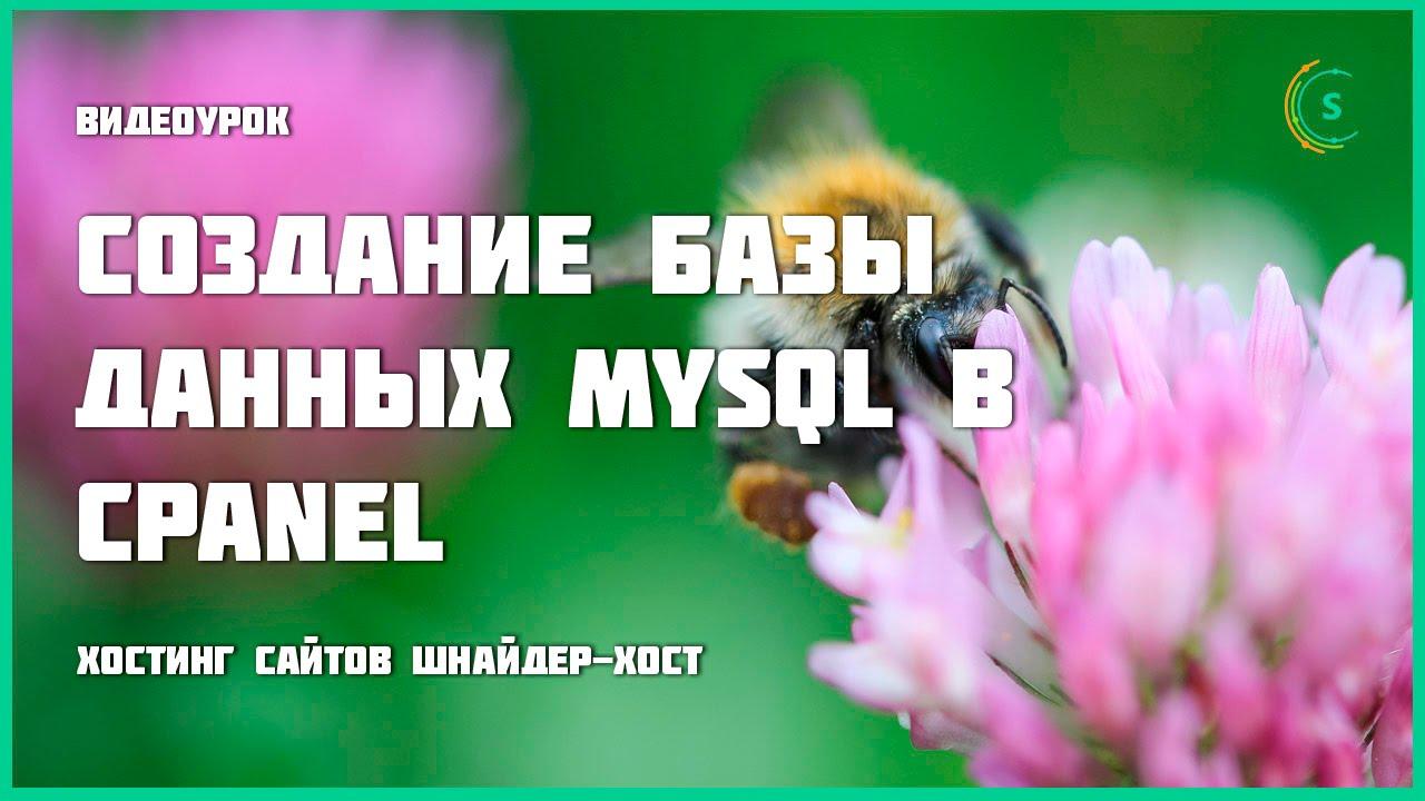 Шнайдер-хост — Создание базы данных MySQL в cPanel