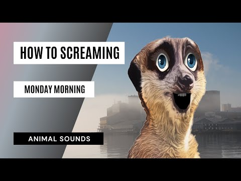 Monday Morning Scream - Sound Effect - Animation