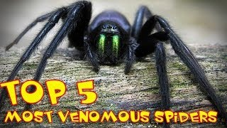 ★ Top 5 ★  |  The Most Venomous Spiders in the World