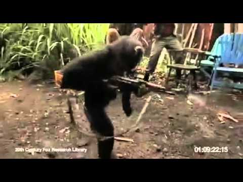 Monkey with AK-47 - Youtube