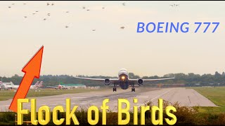 Boeing 777 missed flock of birds during TakeOff | 4K video