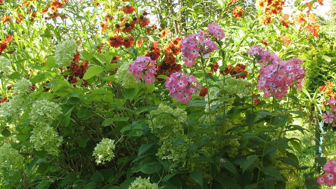 Сад своими руками. Ландшафтный дизайн. Хвойные растения и цветы.