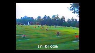 Play In Bloom