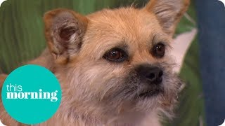 Heartwarming Story of the Stray Dog That Followed Her New Owner 4,000 Miles Home | This Morning