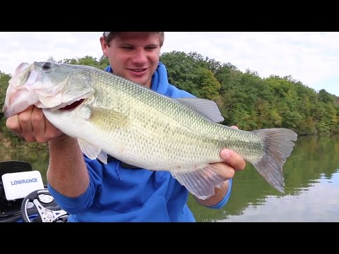 Fly Fishing Tips for Beginners - TAFishing Show from YouTube · Duration:  33 minutes 22 seconds  · 21,000+ views · uploaded on 5/12/2014 · uploaded by TAFishing