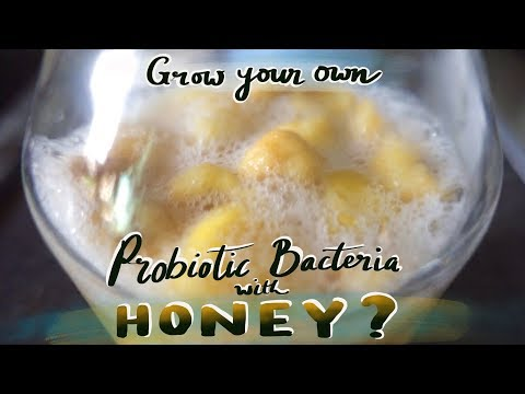 Grow your own Probiotics using Raw Organic Honey. Is this possible?