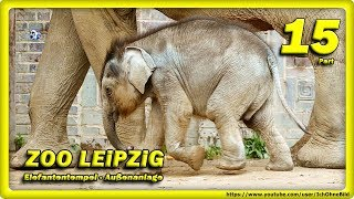 🔴 DON CHUNG, ELEFANTENKALB & Co. • ZOO LEiPZiG / ANiMALS - TRAVEL  - слоновый