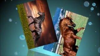 Лошадь фото картинки