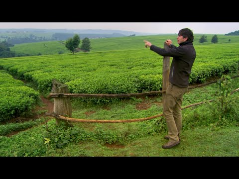 Huge Tea Plantation - This World: The Tea Trail With Simon Reeve - BBC