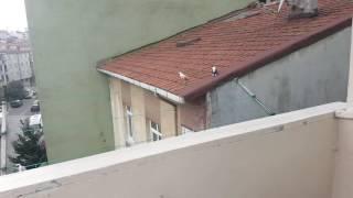 Güvercinlerimizi Uçuruyoruz 1