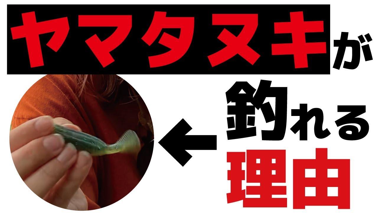 ヤマタヌキがどんなリグでも使えて優秀だった【バス釣り】