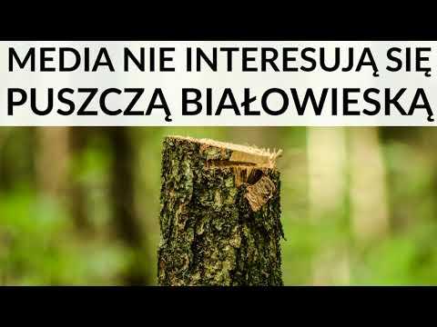 Mainstreamowe media nie interesują się Puszczą Białowieską. Polacy nic nie wiedzą o Puszczy