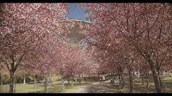 Roihuvuoren kirsikkapuisto - HELSINKI 2019