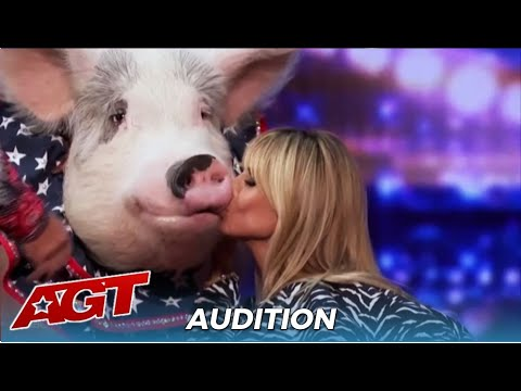 "Pigs Got Talent! Heidi Klum KISSES Talented Pig For ""Good Luck"""