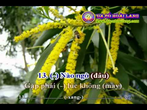 www dacohoailang com   Karaoke  Song Phi Hồ Ðiệp