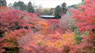Momiji-Madness at Tofukuji-Temple, Kyoto