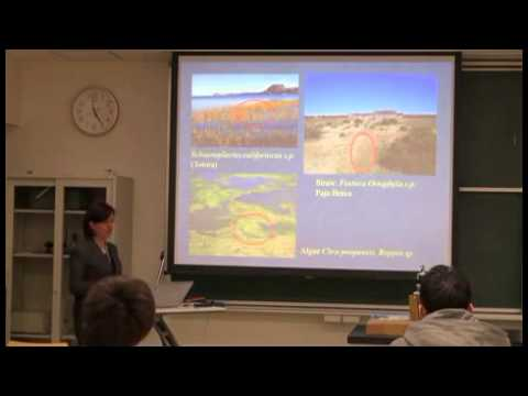 History of Mining and Environmental Impact and Bolivia
