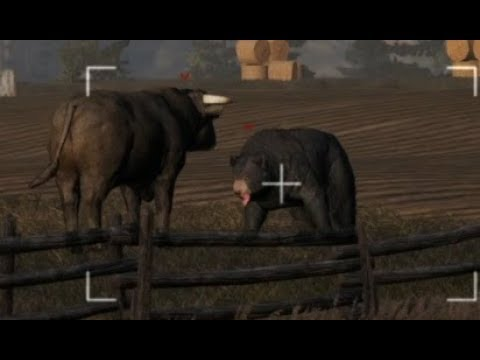 Bear Vs Bull [Far Cry 5] on Xbox One X