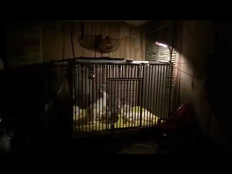 Chó Husky Con Giá 350k / Bé. BẤM ĐĂNG KÝ để được KM