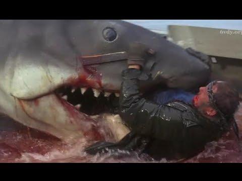捕鲨鱼高手遇见史前巨兽,一口下去人直接变成两截,全程揪着心看