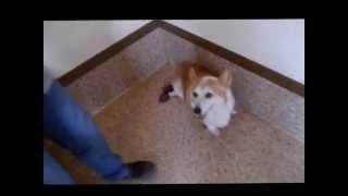 アロマ&ドッグマッサージで犬の人生が変わる http://ameblo.jp/aromali...