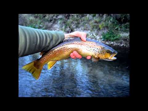 GoPro Fall Trout Fishing in the Driftless Area
