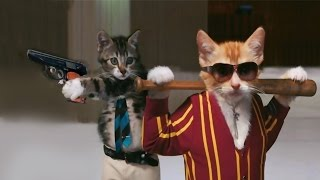 Коты и собаки в роли гангстеров * Katter og hunder i rollen som en gangster