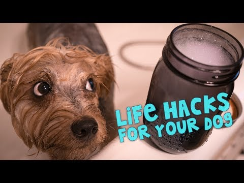 Dozen Life Hacks To Make Your Dog's Life Happier