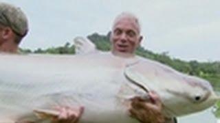 Video Mekong Giant Catfish | River Monsters download MP3, 3GP, MP4, WEBM, AVI, FLV Juli 2018