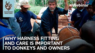Why harness fitting and care are important to donkeys and owners | The Donkey Sanctuary Webinars