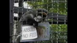 ☺ AFV Part 132 (NEW!) America's Funniest Home Videos 2012 (Funny Clips Fail Montage Compilation)