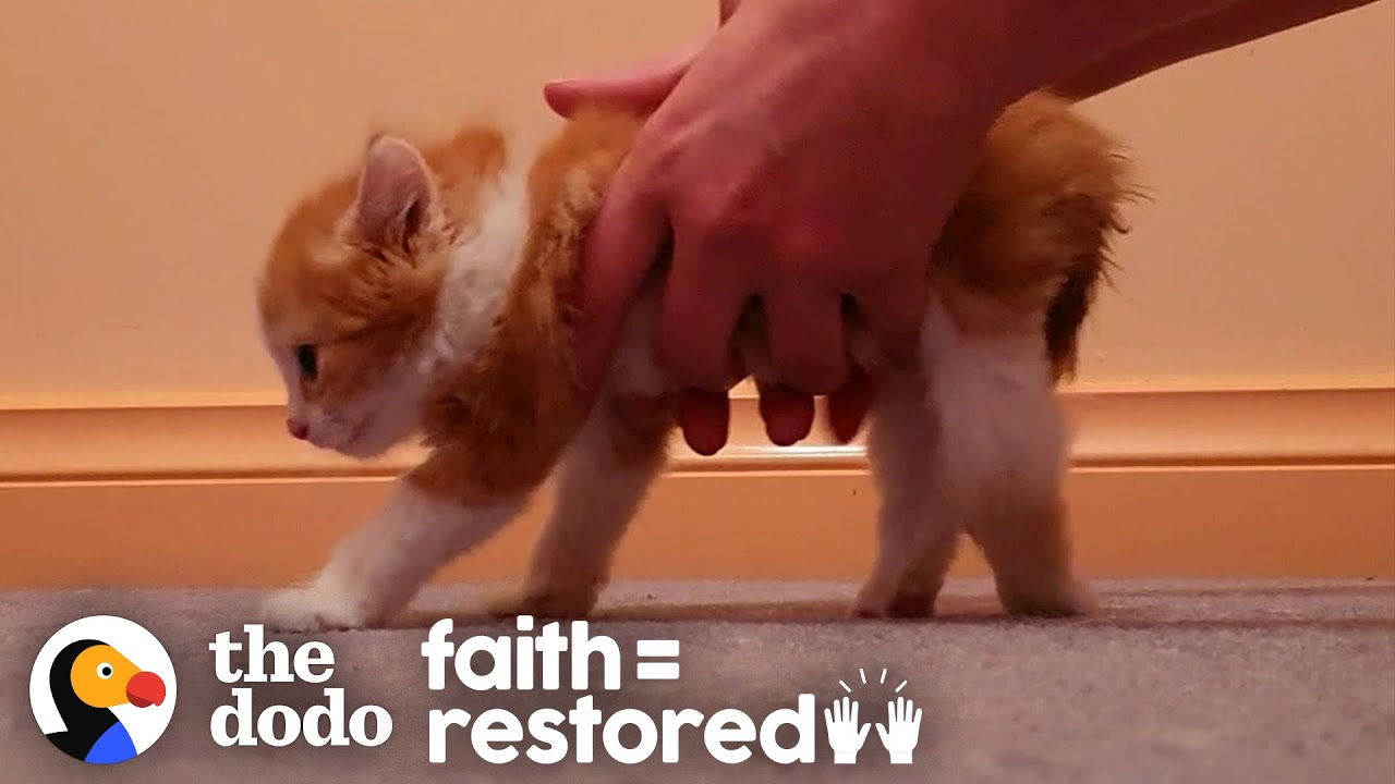 Paralyzed Kitten Decides To Beat All Odds And Walk | The Dodo Faith = Restored