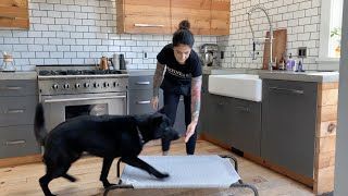 The 'Place' Command (Dog Training)