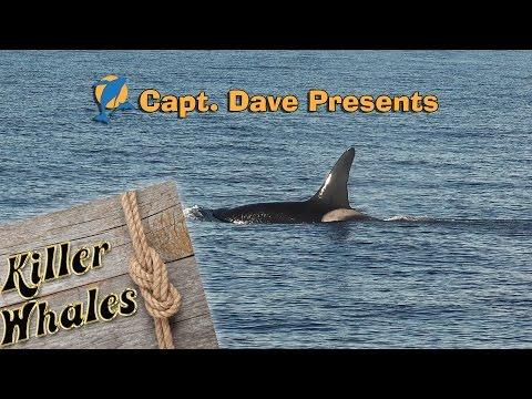 Killer Whales Make Rare Visit to Southern California