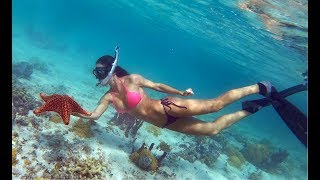Shallow water Turtles & Starfish in the BAHAMAS