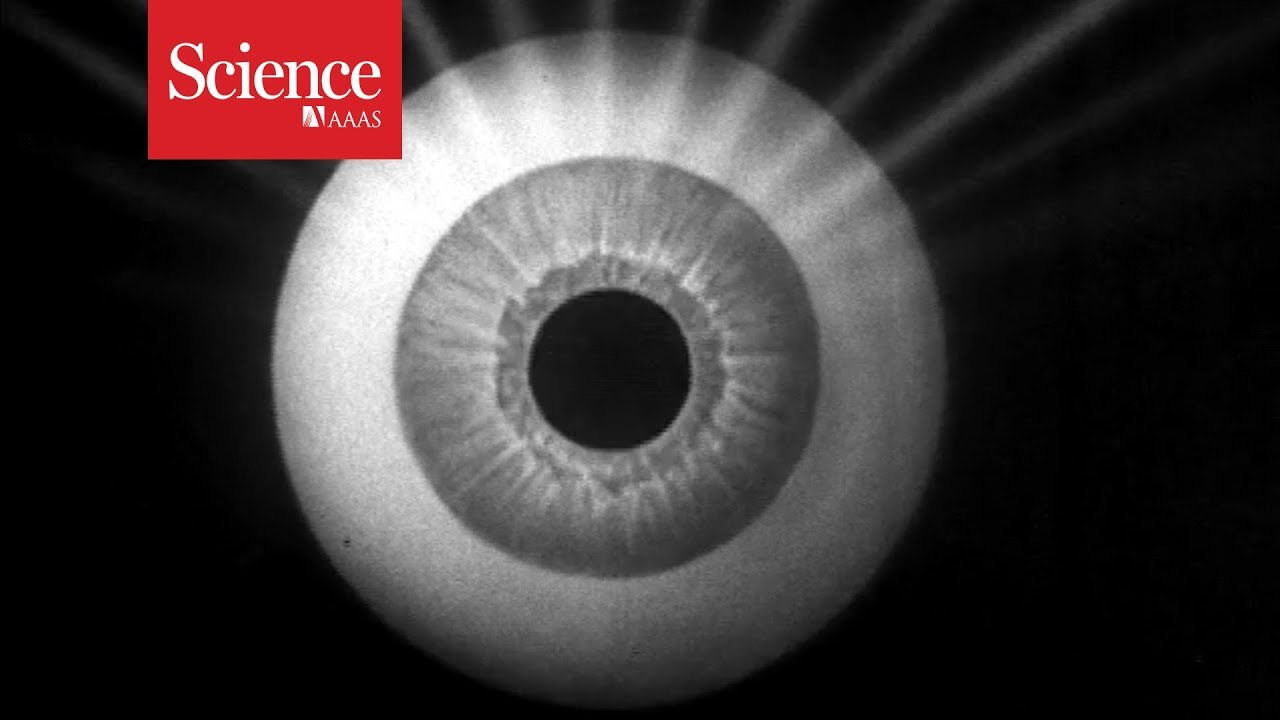 Tiny robots swim through the eye to deliver medicine
