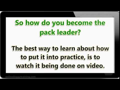 How to Become The Pack Leader Video