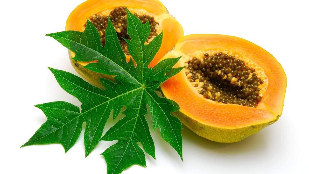 Utiliza el té de hojas de papaya para combatir el cáncer
