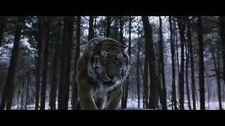 "Фильм ""Тигр"""