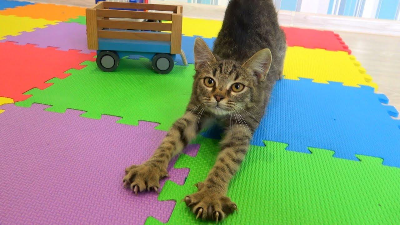 Мы нашли котенка и нашли ему дом. Делайте добро и мир станет лучше!